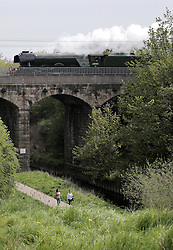 © Under licence to London News Pictures. 10/05/2016 The Flying Scotsman crosses the River Skerne on the Five Arches viaduct in Darlington, County Durham UK, May 10th 2016, on it's journey from London King's Cross to Newcastle.  Photo Credit: Stuart Boulton/LNP