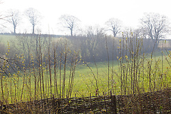 Woven hazel fence with mixed native hedge