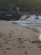 """Mariah Carey on a personal trip to Maui isolated beach in Hawaii,  the guy we cannot ID but they were very close together and holding each other<br /> She was wanting to visit the beach with who we think is the new guy she's dating….who we believe is the backup dancer. <br /> they were just trying to enjoy some seclusion  it was a """"private moment"""". <br /> ©Josh Shaw /Exclusivepix Media"""