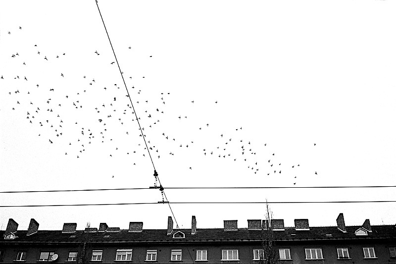 .Birds fly over the houses in the winter sky. Some people keep pigeons sometimes a family connection with the past when the birds were used as message carriers..From Neighborhoods series