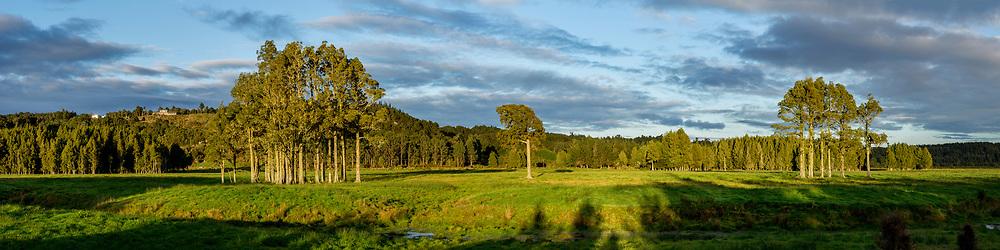 Farmland near Hokitika with stands of native trees in the paddocks.