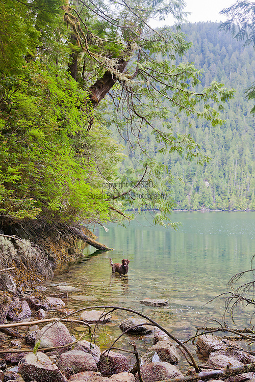 Eagle Nook Wilderness Resort and Spa is located on a remote area of Vancouver Island.   Hiking through the private forests is one of the many adventures available to guests at the resort.  The resident dog, Chase, is available to accompany guests on hikes.