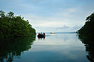 Tourists in a small inflatable boat ply the the waters of a mangrove forest in Golfo Dulce, or Sweet Gulf in Puntarenas, Costa Rica.