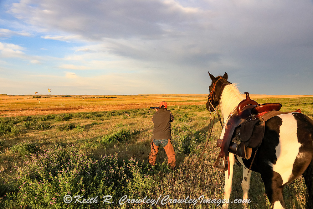 John Zeman takes aim at rising sharptails during a Montana horseback grouse hunt.