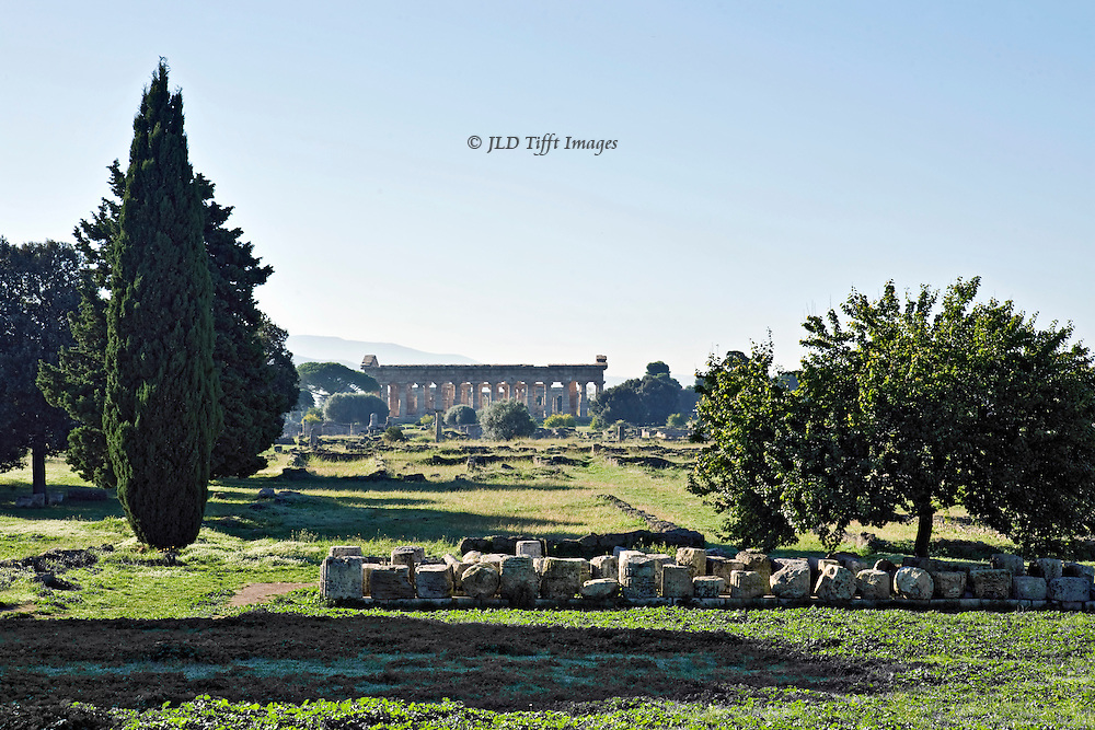 Italy, Magna Graecia : Paestum temples : view across the ancient city ruins toward the temple of Athena or Ceres.