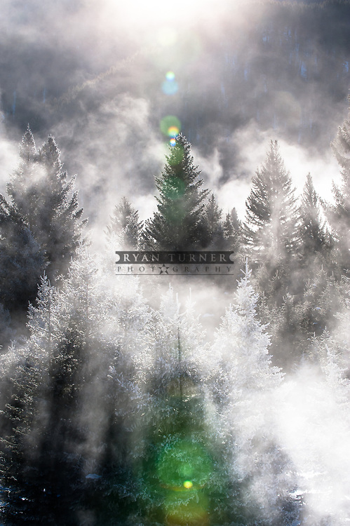 Fog lifting on trees in Montana.  Limited Edition - 75