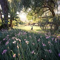 Rancho La Puerta Scenics