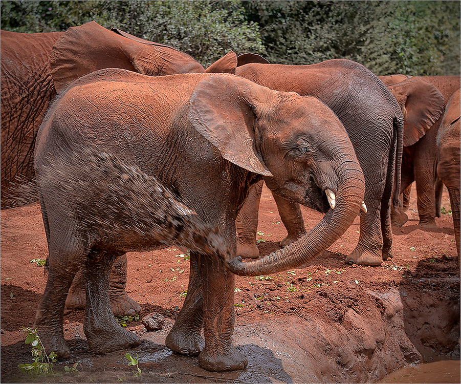 Kenya Elephant Rescue Center Gallery