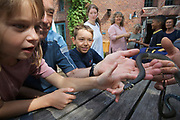 Kinder bestaunen und berühren eine Ringelnatter (Natrix natrix), Ökowerk im Grunewald, Berlin, Deutschland. Children admiring and touching a Grass snake, Oekowerk in the Grunewald, Berlin, Germany.