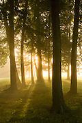 Cranwell Trees