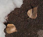 Leaf Portraiture