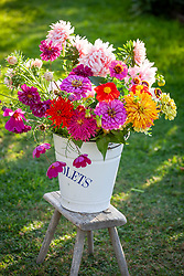 Zinnias and cosmos being conditioned in a bucket.