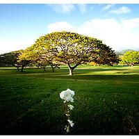Autumn--PunchBowl Hawaii