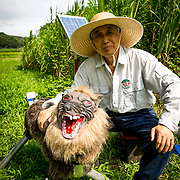 "CHIBA, JAPAN - AUGUST 10:  Chikao Umezawa, head of JA Kisarazu-shi, posed for a photo beside a robot named ""Super Monster Wolf"", a solar powered robot designed to scare away wildlife from farmer's crops in Kisarazu, southwestern Chiba Prefecture, Japan on August 10, 2017. Wolf Bot uses an infrared ray sensor when wild animals approach. It begins to intimidate wild animals by flashing red LED lights from its eyes on and off and blaring 48 repeated different types of loud sounds. (Photo by Richard Atrero de Guzman/AFLO)"