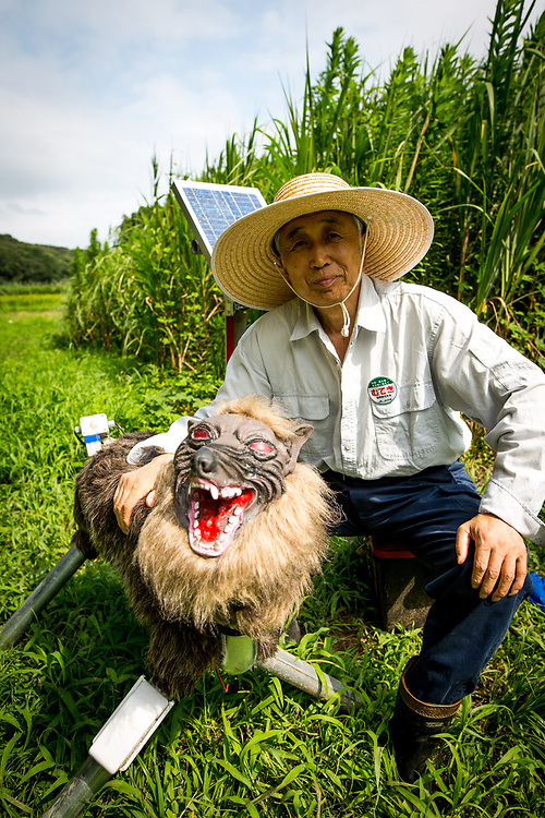 """CHIBA, JAPAN - AUGUST 10:  Chikao Umezawa, head of JA Kisarazu-shi, posed for a photo beside a robot named """"Super Monster Wolf"""", a solar powered robot designed to scare away wildlife from farmer's crops in Kisarazu, southwestern Chiba Prefecture, Japan on August 10, 2017. Wolf Bot uses an infrared ray sensor when wild animals approach. It begins to intimidate wild animals by flashing red LED lights from its eyes on and off and blaring 48 repeated different types of loud sounds. (Photo by Richard Atrero de Guzman/AFLO)"""
