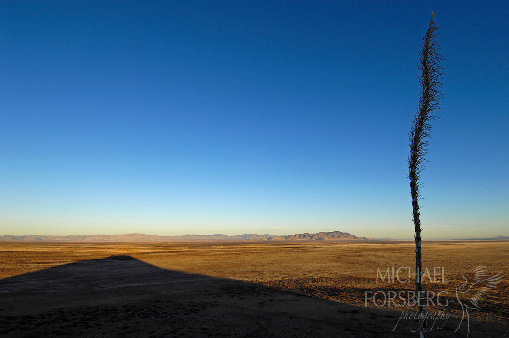 Janos Grasslands, Chihauhaun Desert, Northern Mexico. Chihauhau province. Rancho El Uno (TNC property)..On an winter early morning, an Agave plant stands in silhouette, growing on the side of the lone hill stretching its shadow below over the grassland...The Janos grasslands are threatened by increasing production agriculture, (particularly by Menonite groups) turning grassland over and tapping the aquifer beneath. ..This region is a critical  wintering ground for grassland birds, with important biodiversity and large scale prairie dog towns supporting reintroductions of black footed ferrets.
