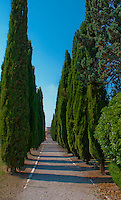 Long row of cypress trees lining a path against a beautiful blue sky on Isola San Michel in Venice, Italy.