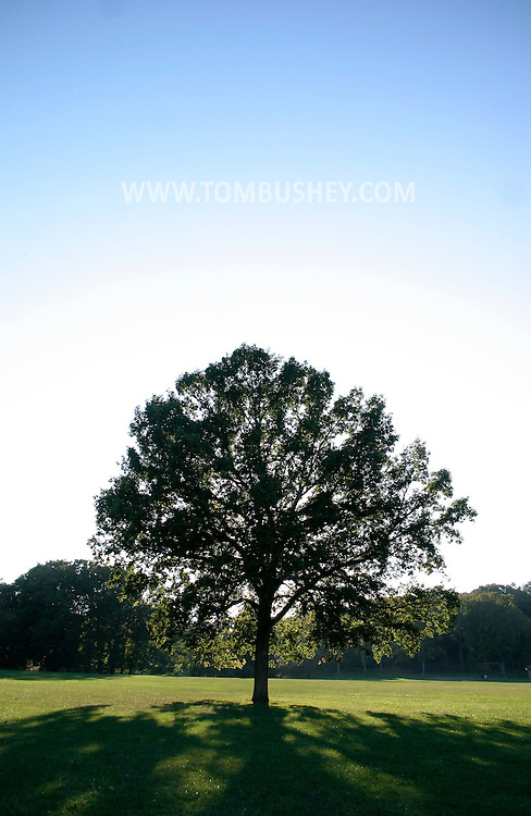 MIDDLETOWN, N.Y. - A large oak tree stands alone in a park in Middletown, N.Y..Oct. 2, 2005.