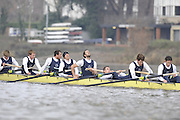 Putney, GREAT BRITAIN,   Bull, exhausted after the 41/4 mile trial race,  the 2008 Varsity/Oxford University [OUBC] Trial Eights, raced over the championship course. Putney to Mortlake, on the River Thames. Thurs. 11.08.2008 [Mandatory Credit, Peter Spurrier/Intersport-images].Crews - .Bull, Bow. Colin KEOGH, 2. Douglas BRUCE, 3.Michal PLOTOWIAK, 4. David HOPPER, 5. Aaron MARCOVY, 6. Ben HARRISON, 7. Sjoerd HAMBURGER, Stroke Colin SMITH and Cox Philip CLAUSEN-THUE... Varsity Boat Race, Rowing Course: River Thames, Championship course, Putney to Mortlake 4.25 Miles,