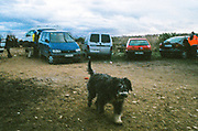 Dog outside parked cars, Spain, January  2014