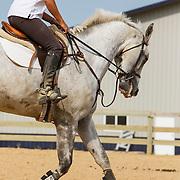 20120628 Raven Ridge/Schlepner Horses