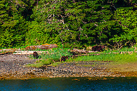 Magoun Islands State Marine Park, Krestof Sound,  Inside Passage, Southeast Alaska USA.