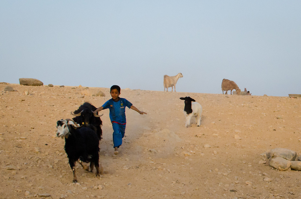 A bedouin boy chasing one of his family's goats.