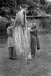 BANGLADESH DINAJPUR OCT94 - Jute harvest in rural Dinajpur, northern Bangladesh...jre/Photo by Jiri Rezac..© Jiri Rezac 1994