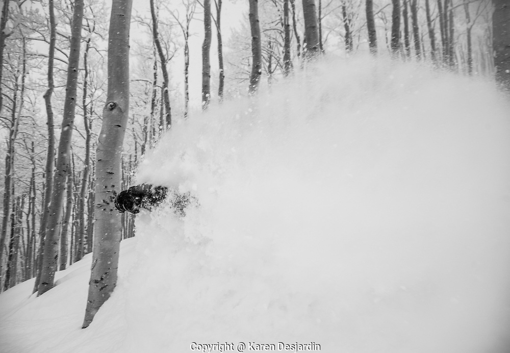 Only a ski glove is visible through a cloud of powder snow as an alpine skier skis virgin snow through the trees, Steamboat Springs, CO.