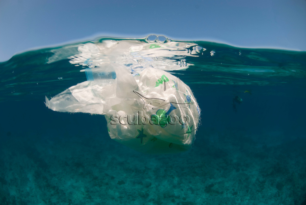 Split shot of disposable napkin floating on surface, South Ari Atoll, The Maldives