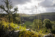 DEVILS BRIDGE, WALES, UK 17TH AUGUST 2019 - Rural Mid Wales scenic landscape with old stone wall and green countryside background, Devils Bridge, County of Ceredigion, Mid Wales, UK.