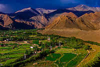 Yurtung, lush agricultural landscape near Leh, Ladakh, Jammu and Kashmir State, India.
