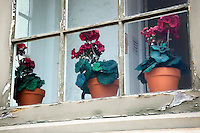 Potted Geraniums on Windowsill - Point Pinos Lighthouse, Pacific Grove, California