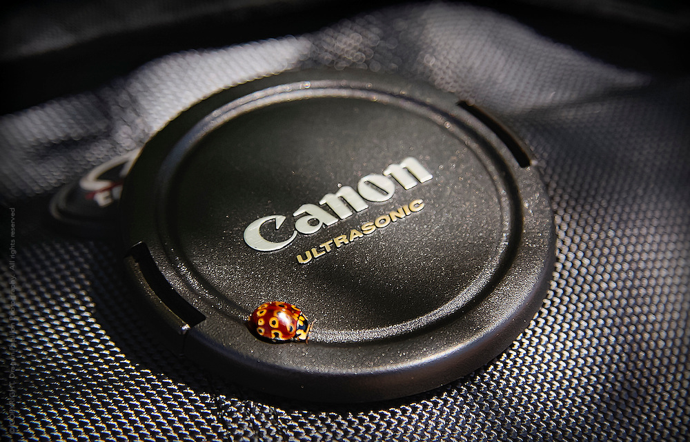 nature photography: ladybird beetle sitting on canon camera lens cap with textured black background
