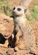 July 20, 2013: Oklahoma City Zoo
