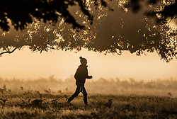 © Licensed to London News Pictures. 09/11/2019. London, UK. A jogger runs through a cold and frosty Bushy Park in south west London. A cold spell is forecast in parts of the United Kingdom. Photo credit: Peter Macdiarmid/LNP