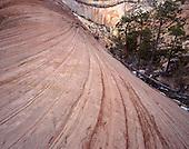 Large Format Photos, Zion National Park