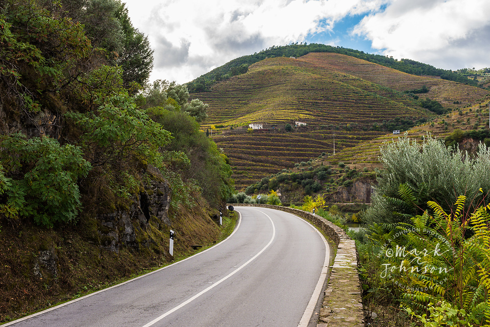 Curving road and the steeply terraced hillside vineyards of the Douro Valley, Portugal