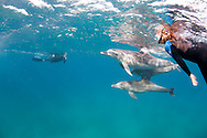 The Ponta dolphin accept unfamiliar humans into their space because of the trust implicit through regular and careful interactions.