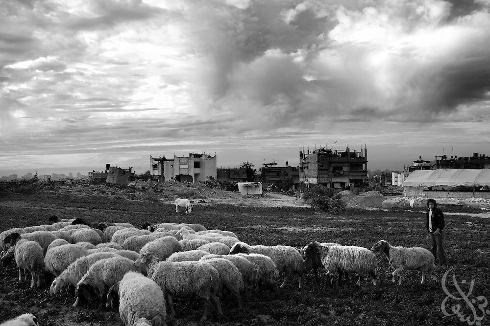 A Palestinian sheep herder tends his flock against a backdrop of destroyed homes in the Abid Rabbo district of theJabaliya camp in Gaza December 20, 2009. A year after the Israeli military launched the controversial 22 day long Operation Cast Lead offensive against Gaza, Palestinians across the tiny strip continue to struggle daily in various ways economically, physically, and emotionally. ..