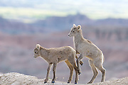 Little Bighorns, South Dakota