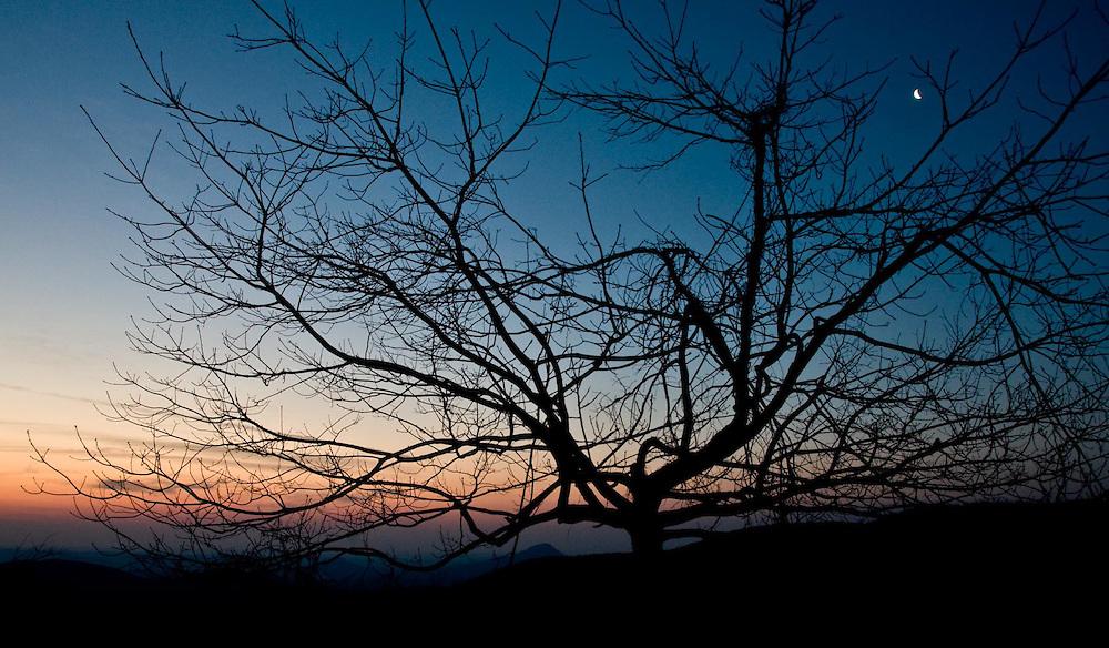 Spectral Dawn