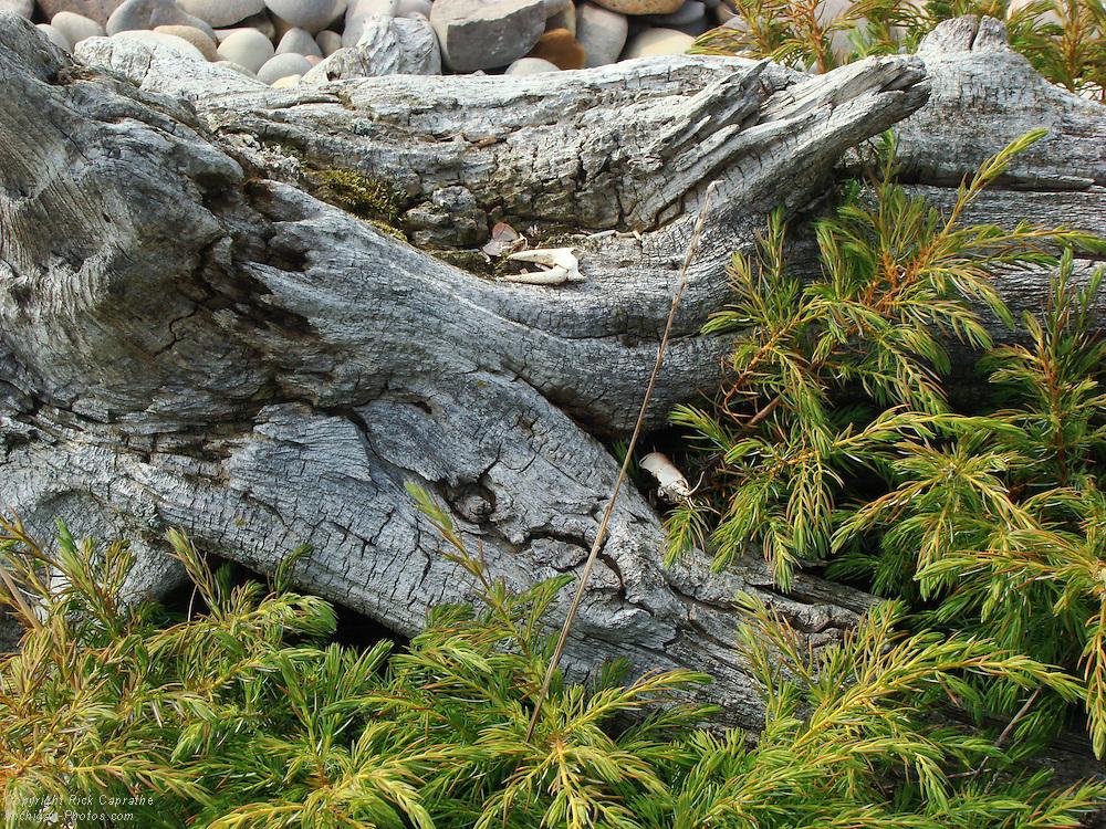 Beach Driftwood, Fisherman's Island