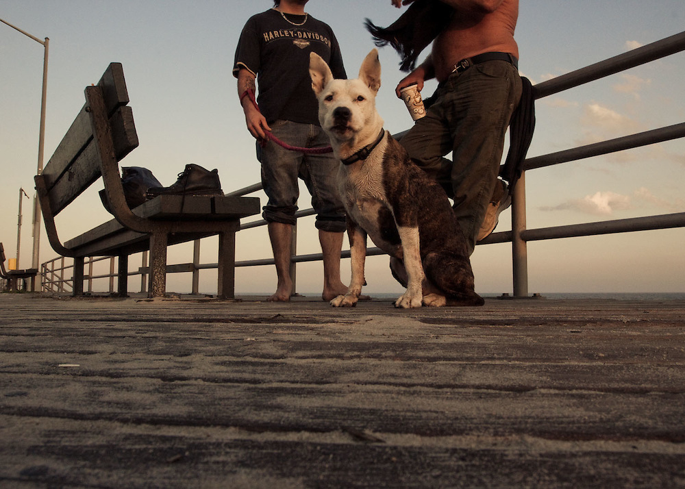 A pitbull, with its owner and a friend, chill on the boardwalk at Beach 91, Rockaway Beach, Queens, NY.