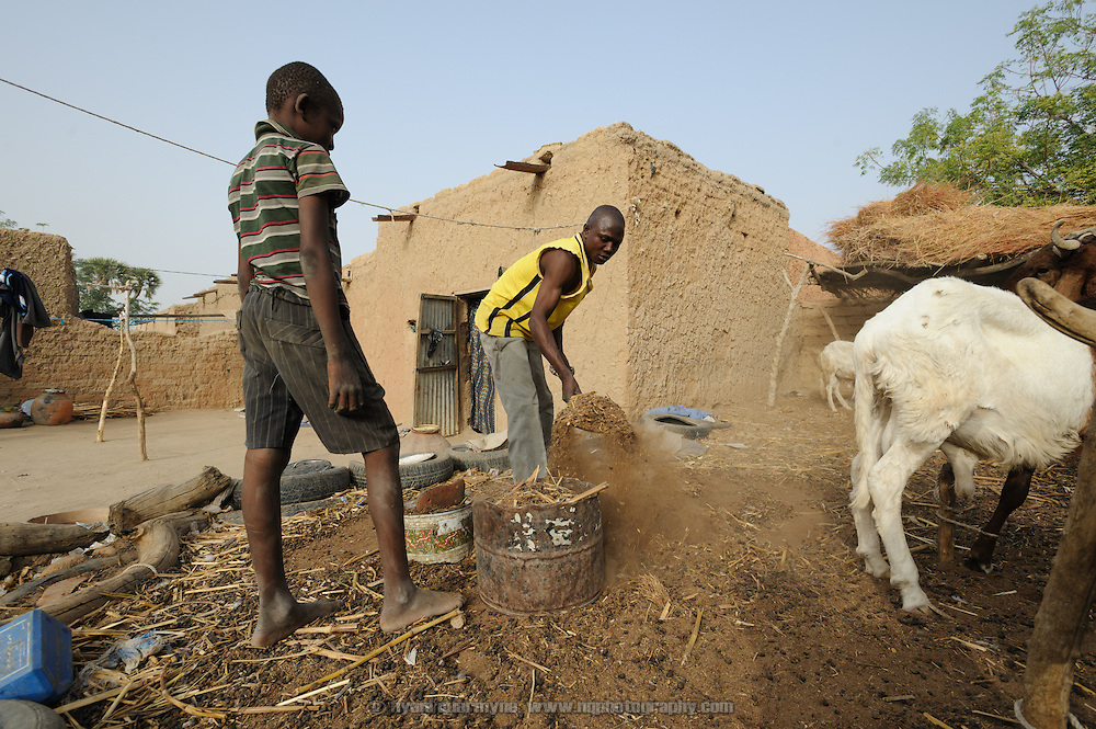 Family members tend to livestock at the home of Halima Moussa's father-in-law, Alhaji Maman Bilali, in Tessaoua in Niger. Following a failed harvest, Halima and her children have moved in with him and his family, as her husband has migrated to Maradi in search of work.