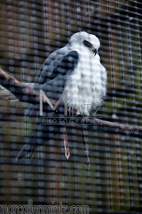 Birds of the Cascades Raptor Center in Eugene, Oregon.