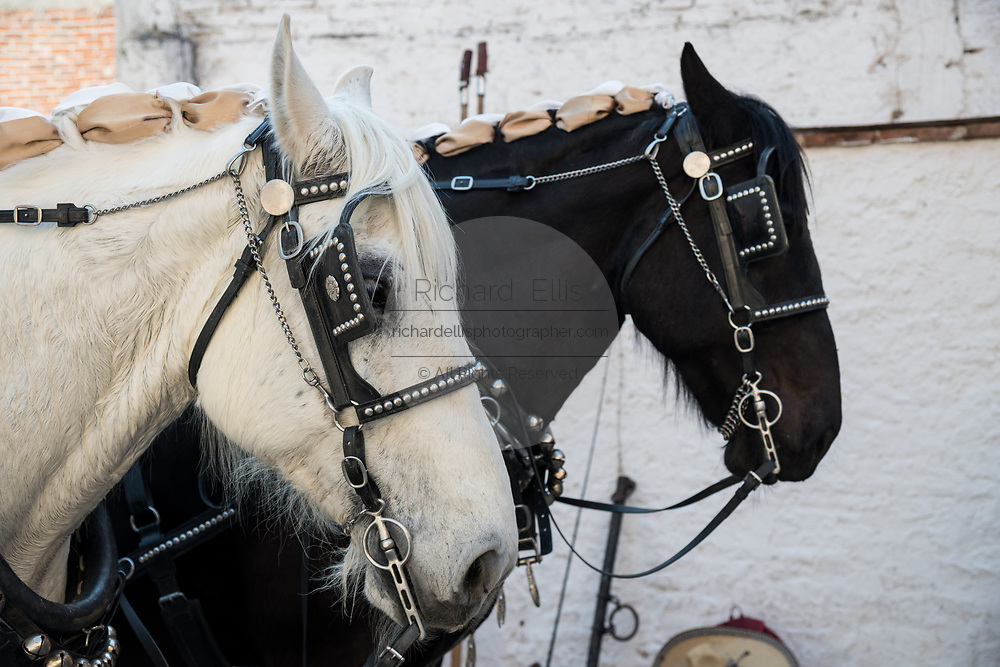 Horses wait to be prepared for carrying the Picadors at the Plaza de Toros in San Miguel de Allende, Mexico. Picadors ride horses surrounded by a peto, a mattress-like protection that greatly minimizes damage to the animal during the bullfight.