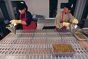 Workers at the California based HotLix candy company pour hot apple flavored syrup over molds containing mealworms to produce Worm-in-Apple suckers, Pismo Beach, California, United States. (Man Eating Bugs page 181 Top)