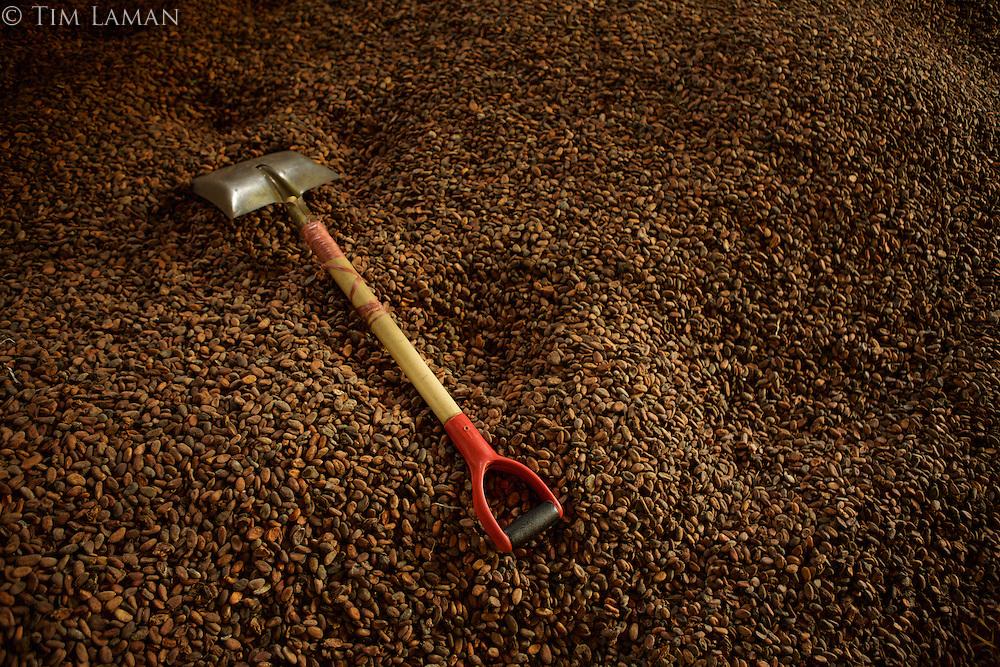 Spice warehouse in Ternate.  Pile of cacao beans for making chocolate.