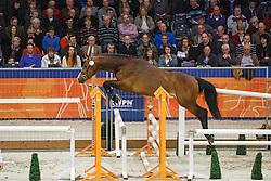 117 - Caramel de la Creme<br /> KWPN Stallion Selection - 's Hertogenbosch 2014<br /> © Dirk Caremans